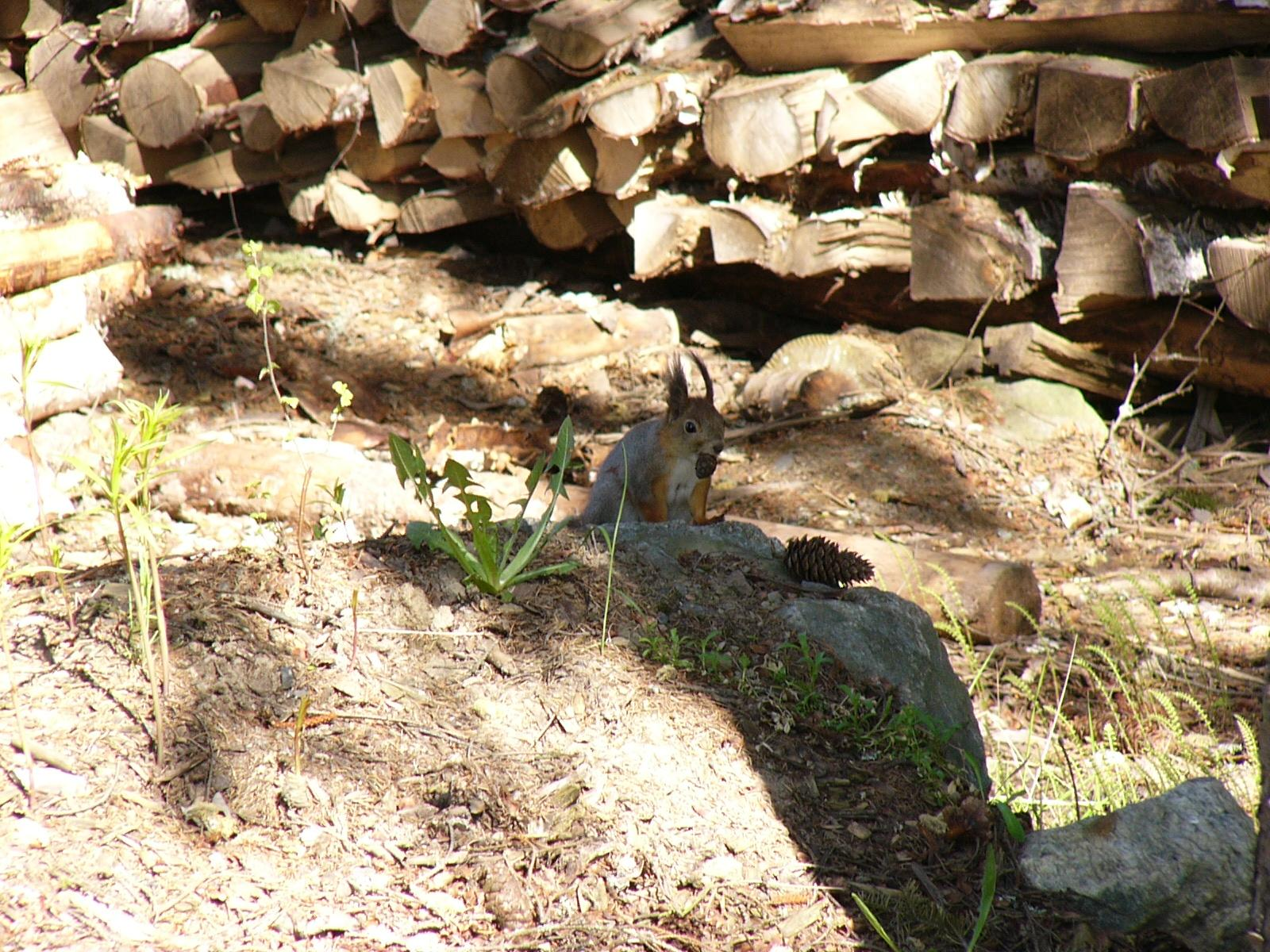 You are viewing the Squirrel wallpaper named Squirrel 3.