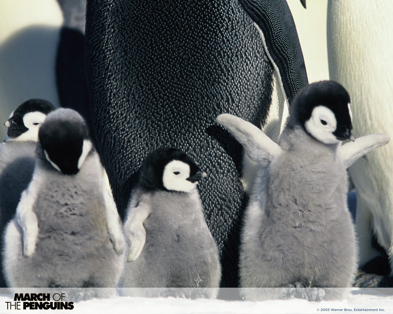 March of the penguins 5